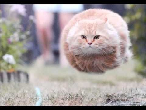 I Gatti Più Pazzi Del Web Cats Funny Cat Pictures Funny Cats E