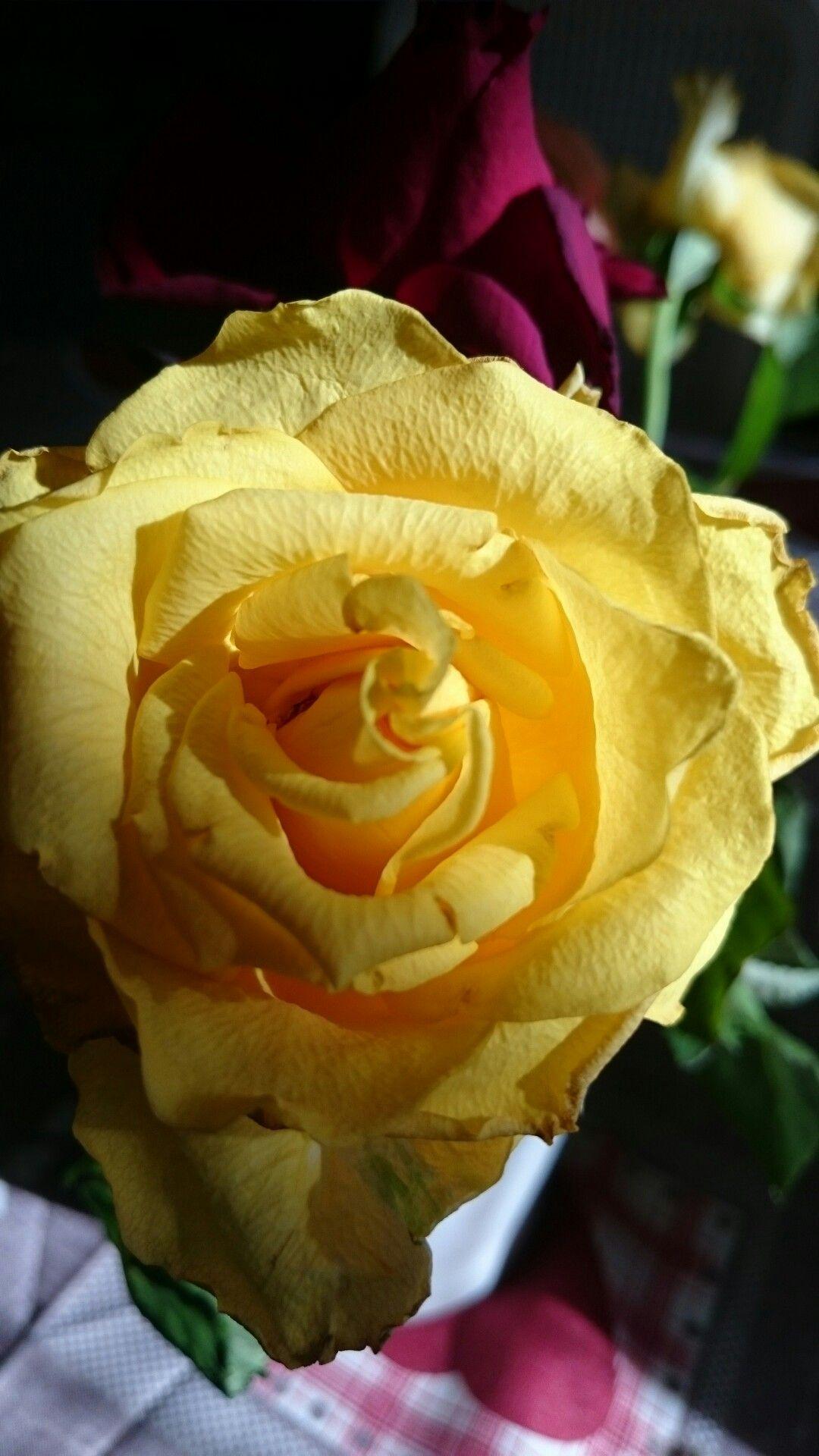 Épinglé par patricia Merme sur flowers