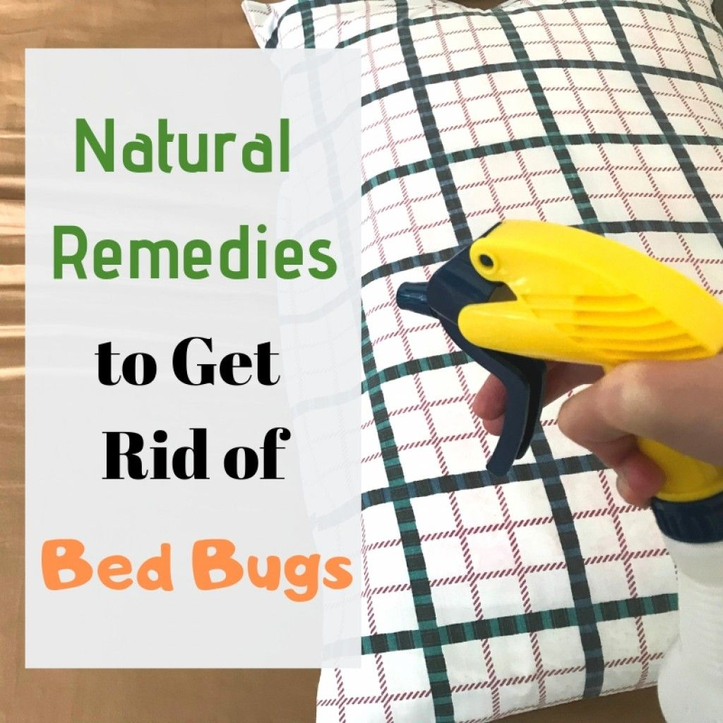how to make natural bed bug repellent