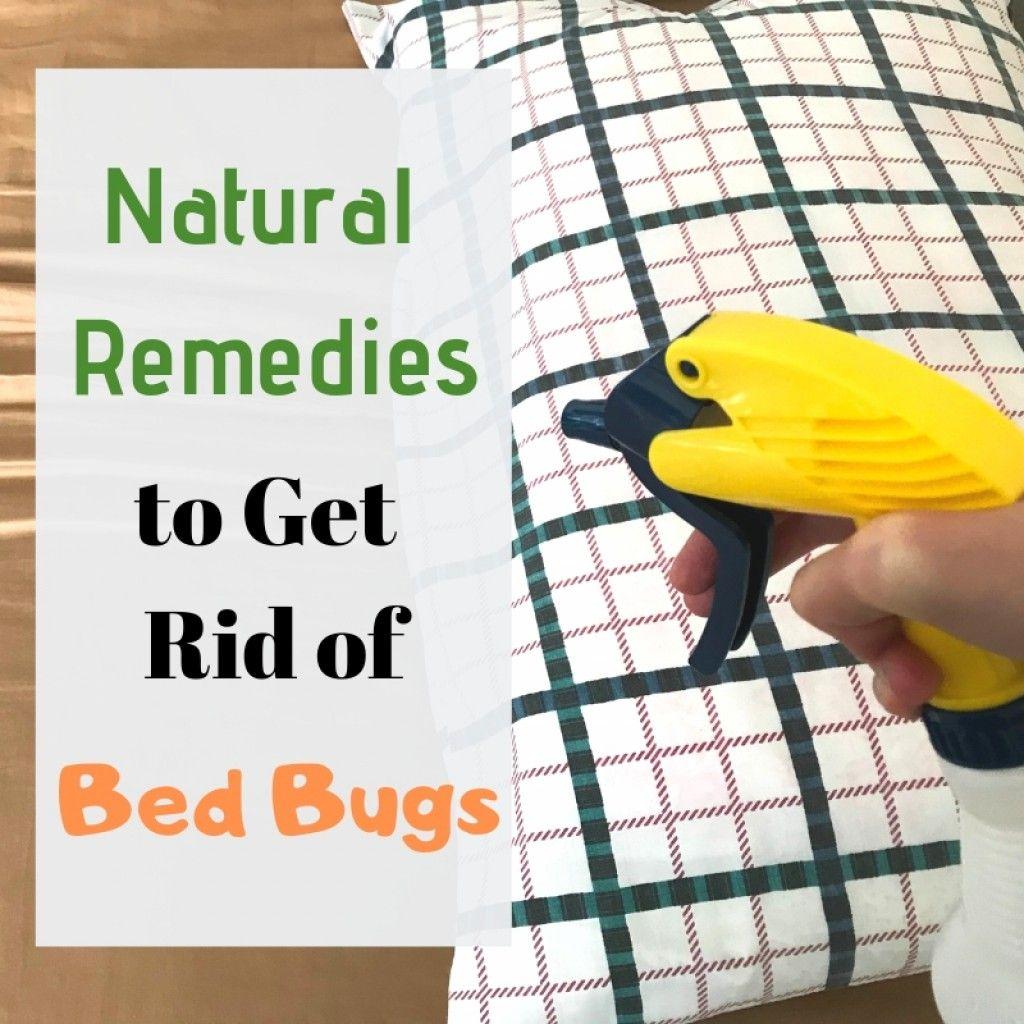 diy bed bug treatment