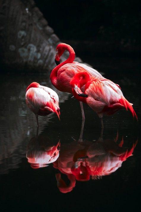 ♥ flamingos, belos reflexos da família!!!