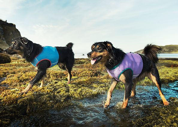 Cooling Vests By Hurtta Dip In Water And Wring Dry Keep Your Pup