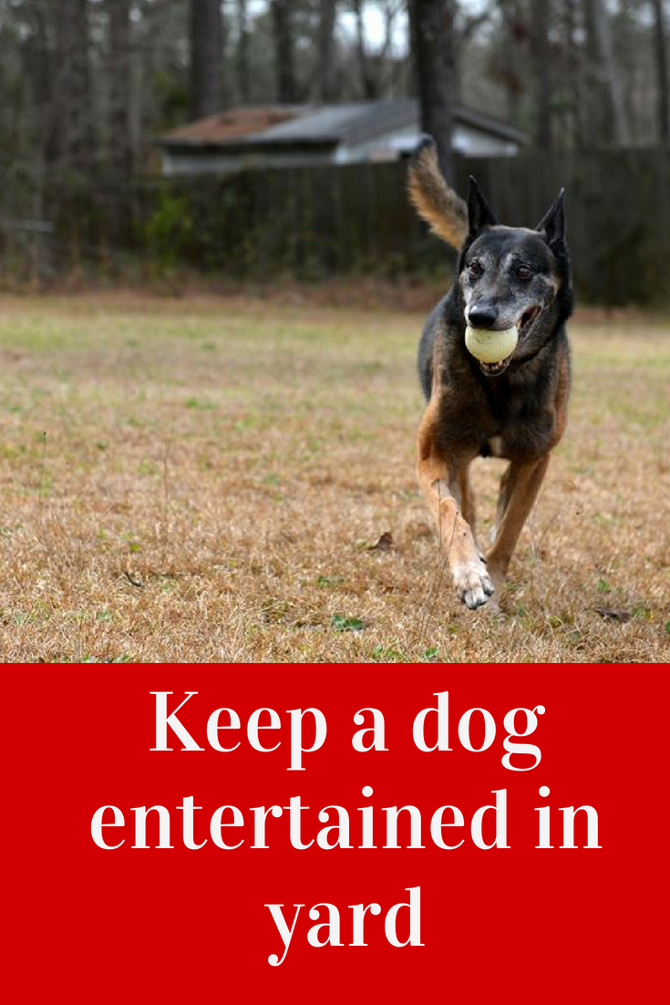 How To Keep A Dog Entertained In Yard Dog Activities Outside
