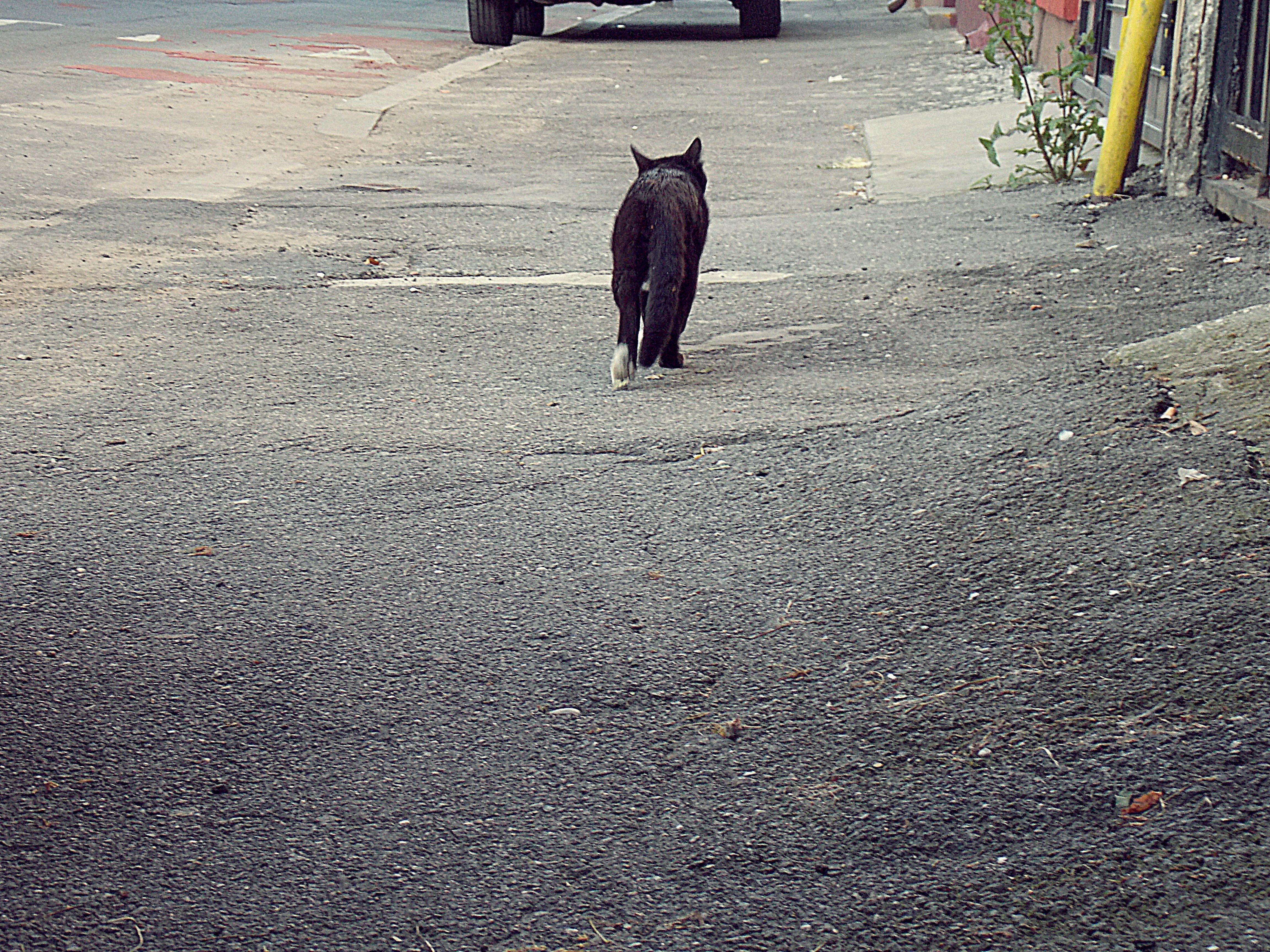 #urbancat Bucharest