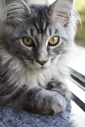 Most Beautiful Cat Keep in mind that if you're thinking