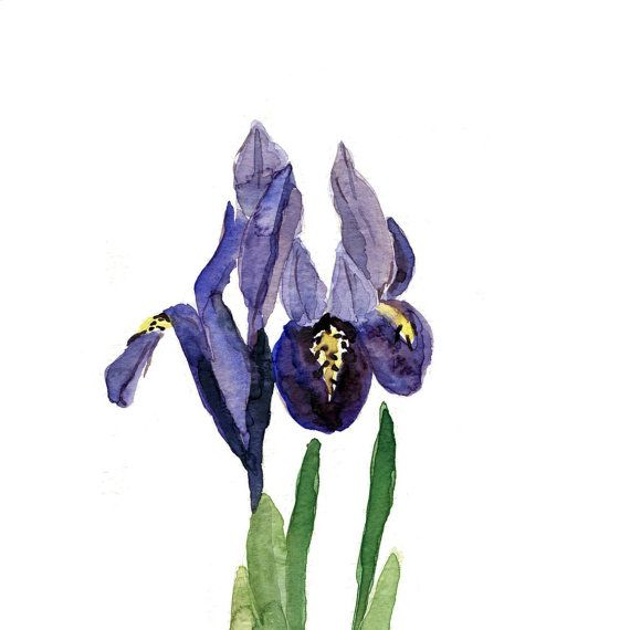 Iris art print of  original watercolor painting by TheJoyofColor, $21.00