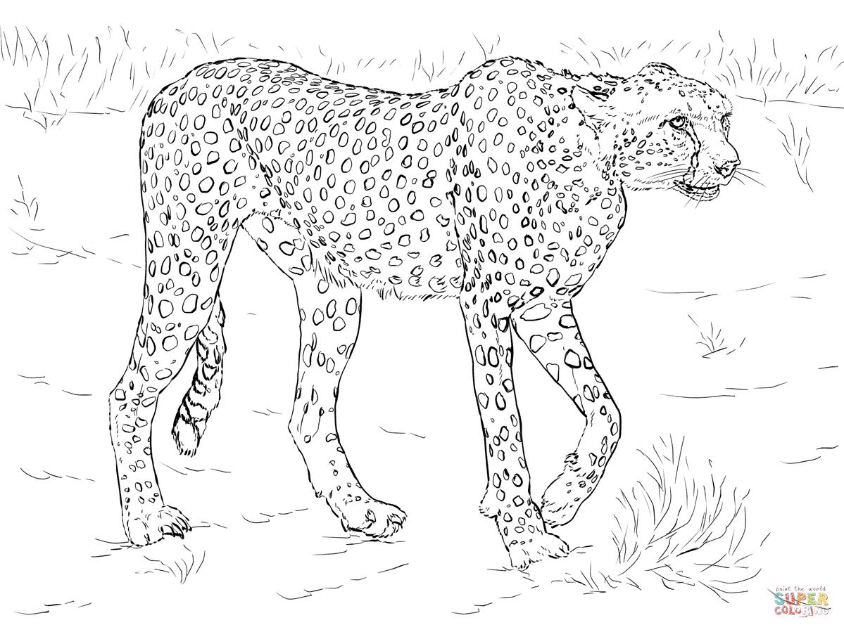 Cheetah Super Coloring Disegnare animali, Animali, Disegni