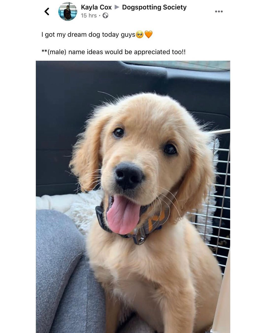 33 Funny And Hilarious Animal Memes That Will Make Anyone Have A Great Day Dog Memes Dog Kisses Funny Dog Videos