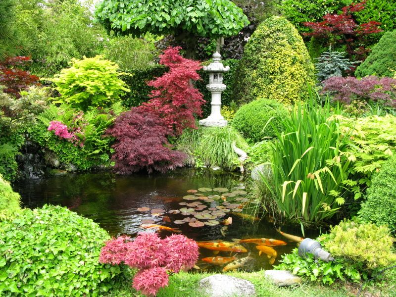 Japanese garden i have a pond in my back yard with gold for Japanese koi pond garden design