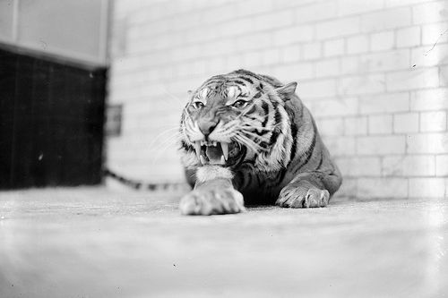 :( | Celtic Tiger? (por National Library of Ireland on...