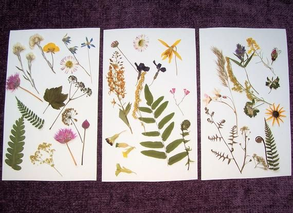 Pressed Flowers and Ferns From Northern Michigan.  Dried flowers, craft supply, preserved flowers, botanical. #pineconeflowers