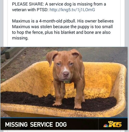 Pin By S James On Pittie Luv Losing A Dog Dog Veteran Small Puppies