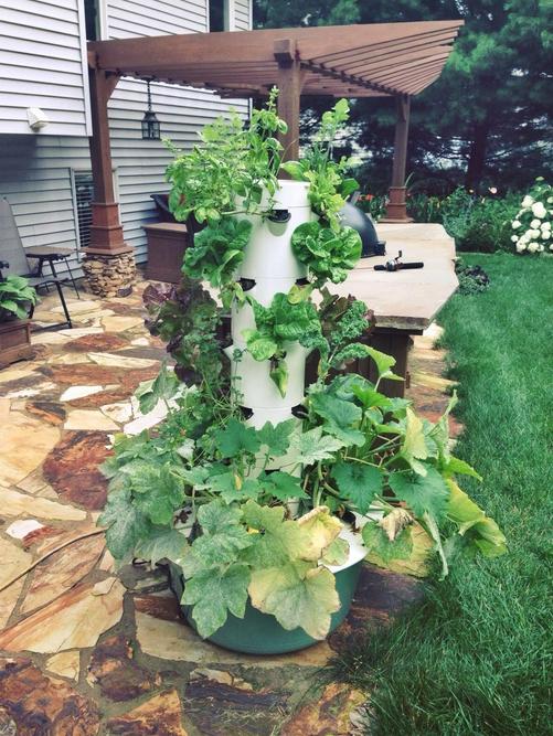 Why Every Homestead Needs A Tower Garden Tower garden