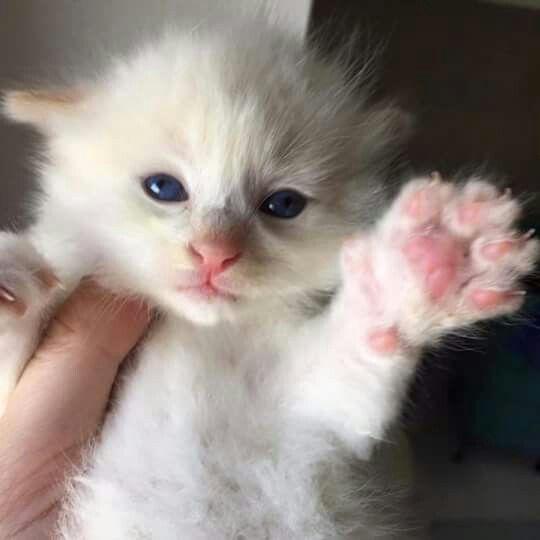 Idea By Sharon Robinson On Cute Animals Newborn Kittens Kittens