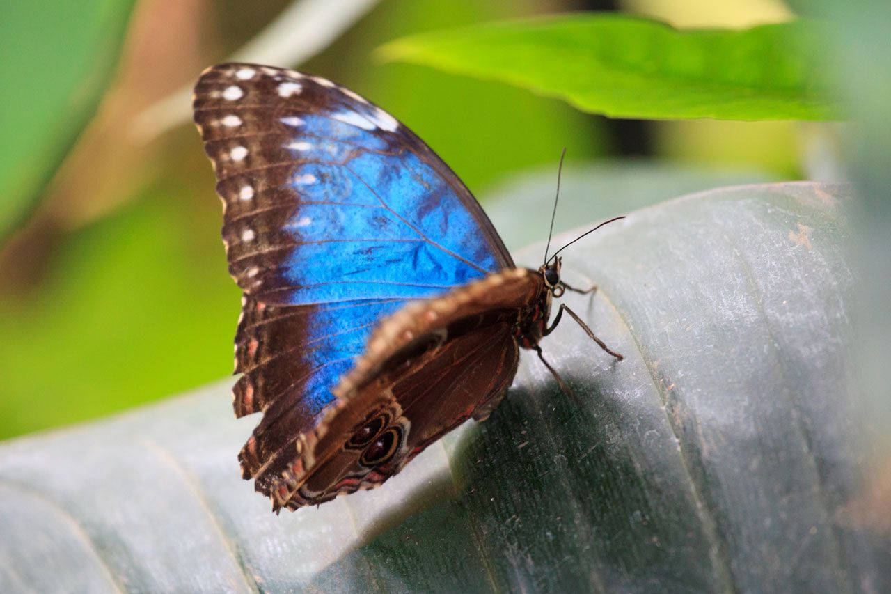 butterflies | Farfalla blu di Petr Kratochvil