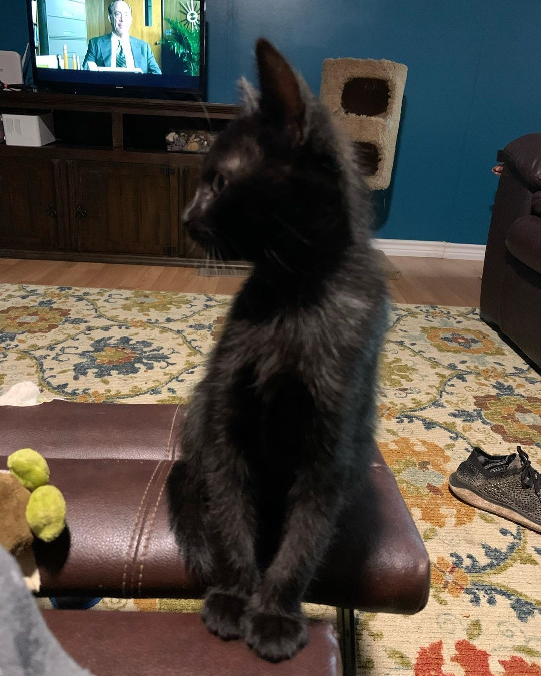 Mom Can You Stop Taking My Picture Blackkitten Blackkittensofinstagram Pepperthekitten Baby Cats Scared Cat Cute Cat Drawing