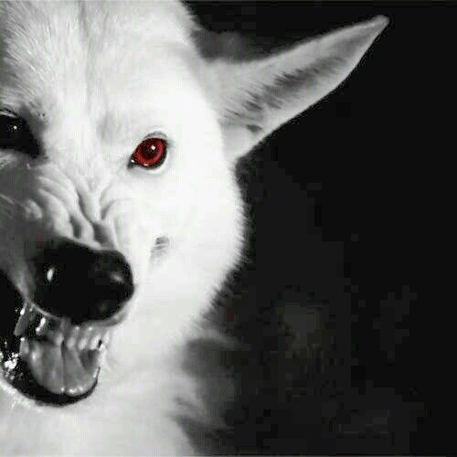 A Lady And Her Dire Wolf: Ghost Was A BADASS In Tonight's Episode