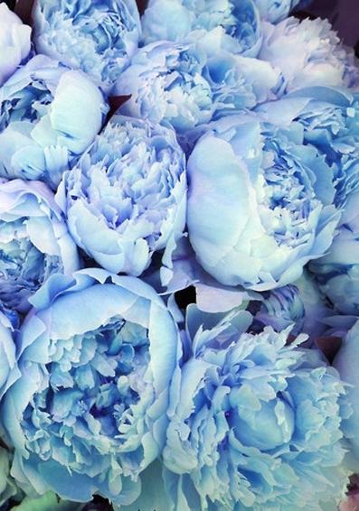 Adorned In Flowers Indigo Petals Experience Vibrant