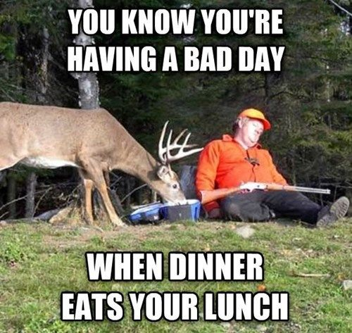 It's a Great Day for the Deer!