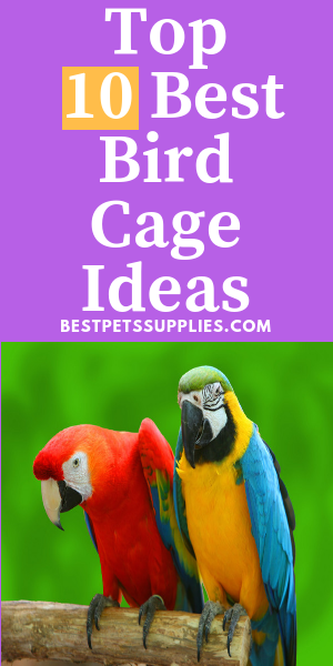 Looking For Best Bird Cages? Here is the Complete list For you on