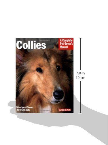 Sheltie Sheltie Dogs Sheltie Smart Dog
