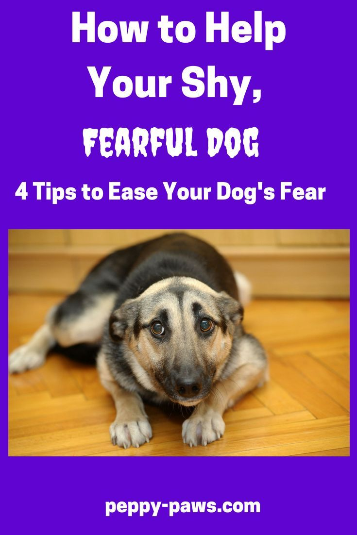 Fearful Dog Training Enrichment For Fearful Dogs Fearful