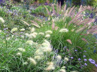 Winterharte Gräser Garten pin hamsel auf moodboard pflanzsteine