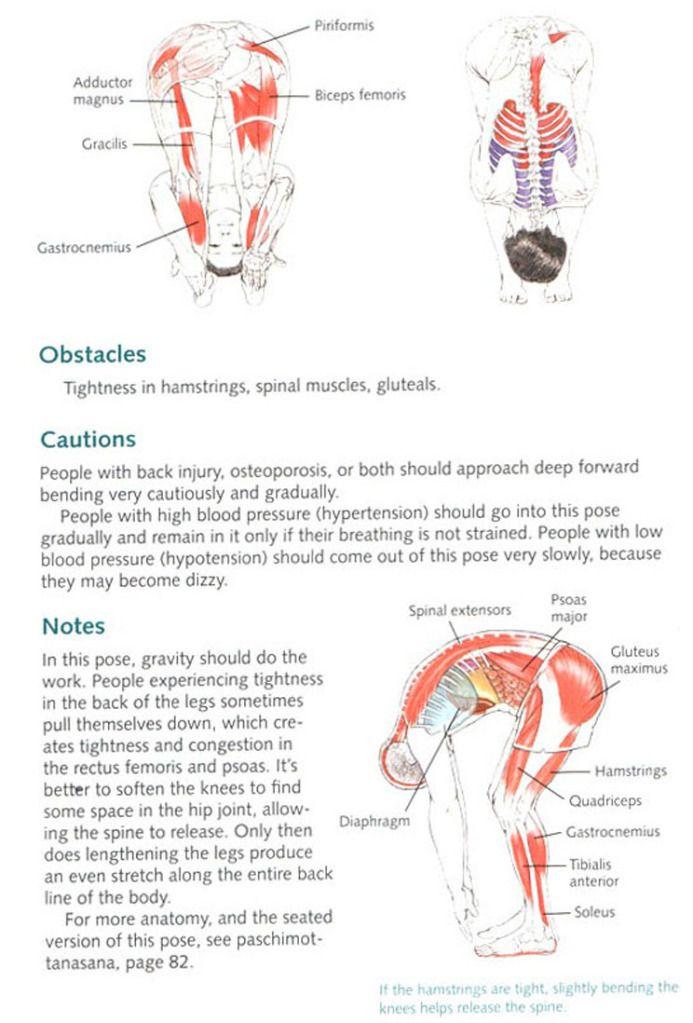 Kiddo TV: Yoga Anatomy | Yoga anatomy | Pinterest