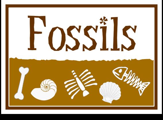 Fossils treetop displays eyfs ks1 ks2 classroom for Soil facts ks2