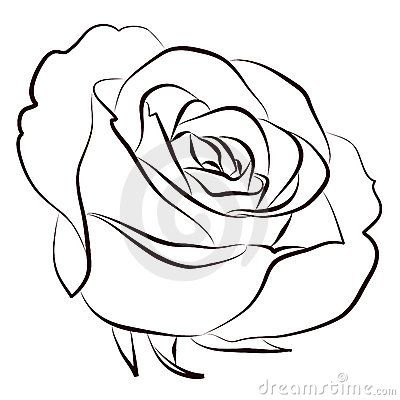 Rose Stock Photos 222 319 Rose Stock Images Stock Photography Pictures Dreamstime Page 2 Roses Drawing Rose Drawing Drawings
