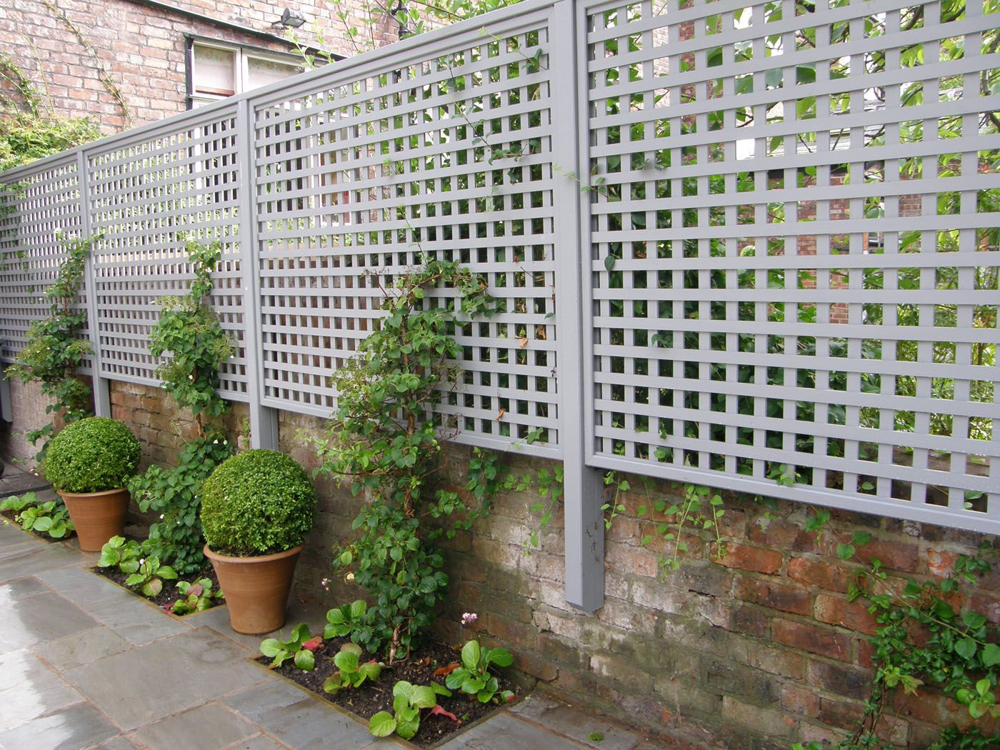 Creative uses for garden trellises greenery dwarf and for Wall trellis ideas