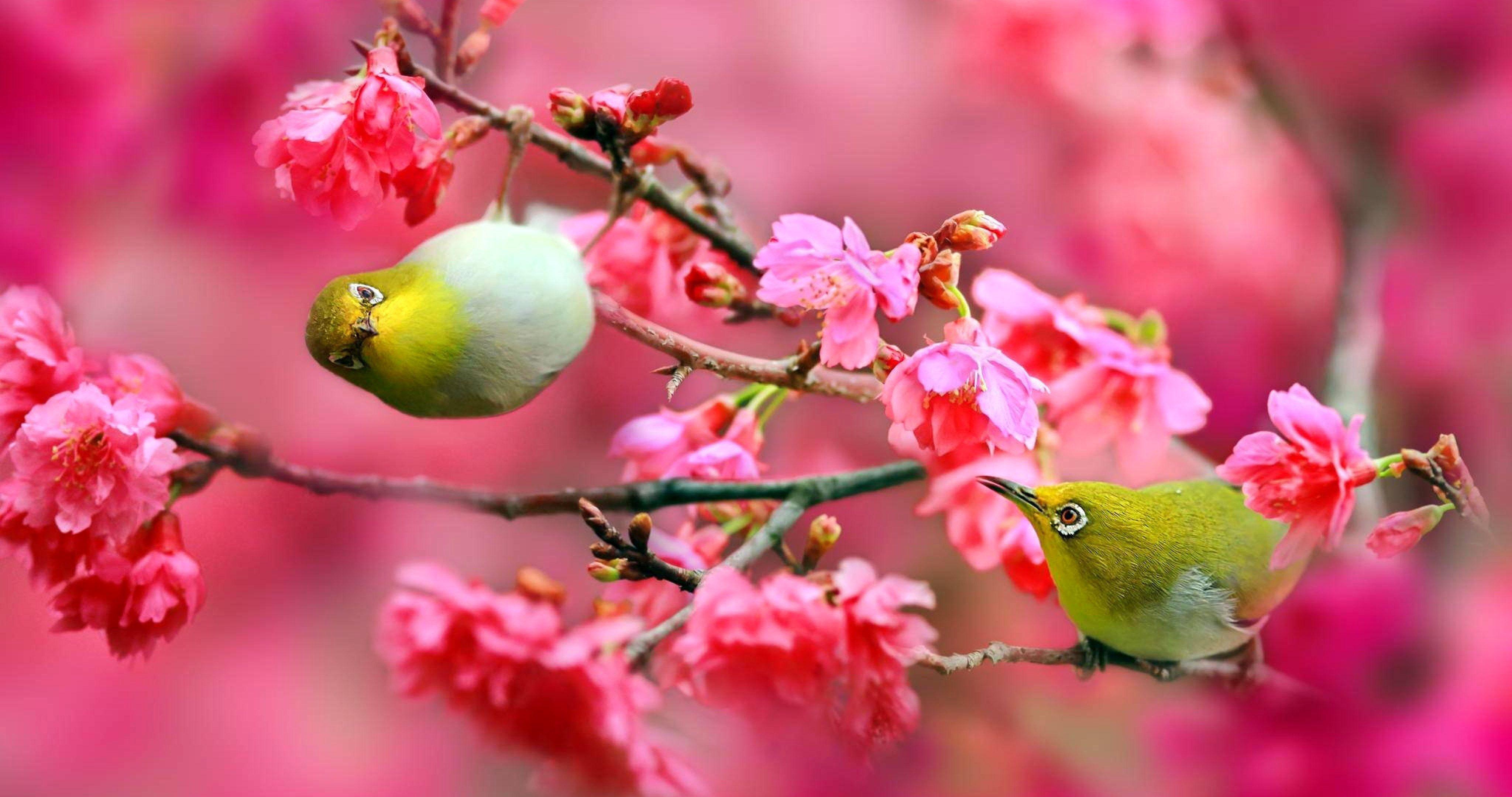 4k Wallpaper Nature Bird Gallery Di 2020 Bunga Sakura Bunga Gambar
