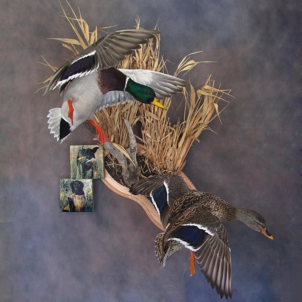 Pin By Tyler Richardson On Taxidermy In 2019 Taxidermy
