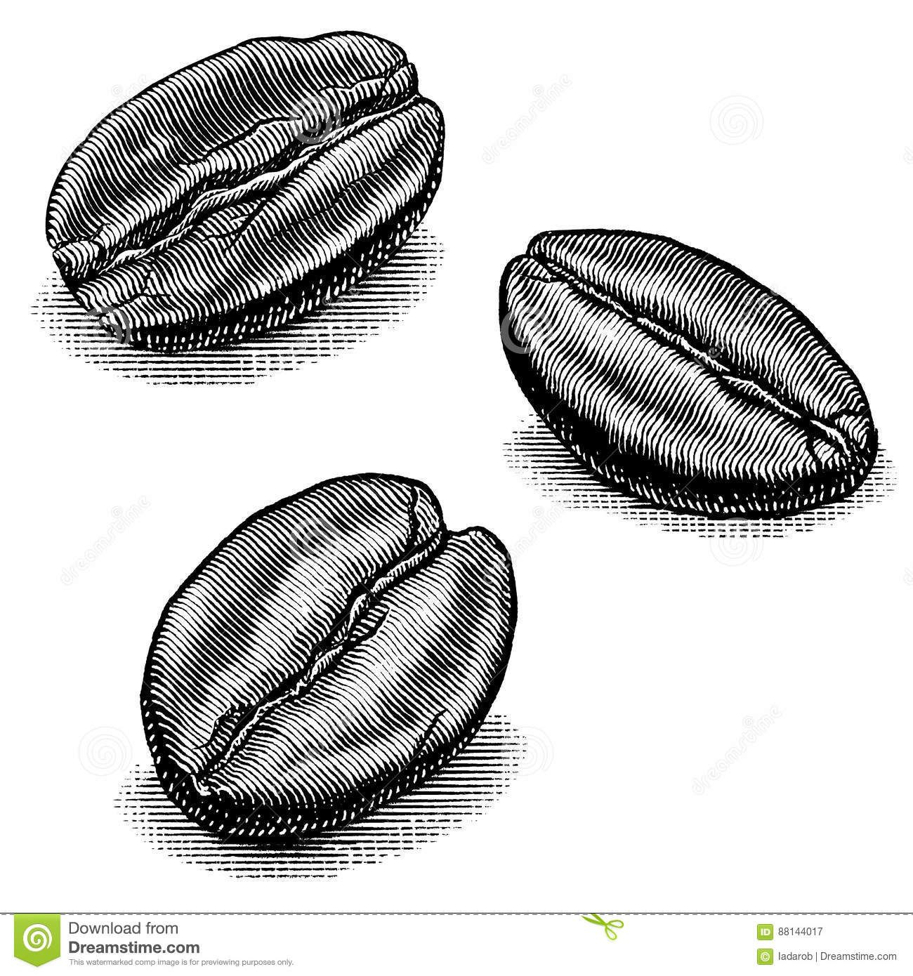 Coffee bean illustrations stock vector coffee