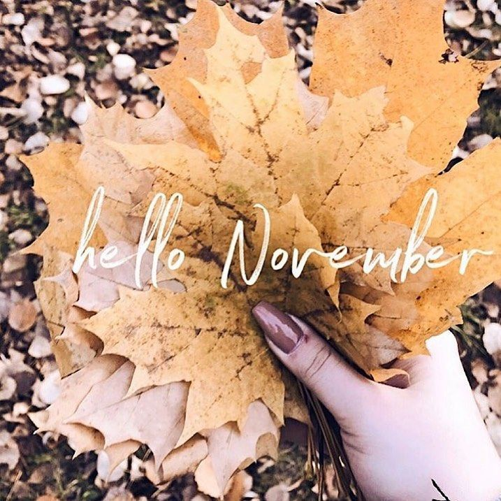 Fooxer Market Buy Download Free shipping #hellonovembermonth Read More on the Think Positive and Have the BOOK New Month New Deals Hello November . . . . $50 Classic Full Sets for All New Clients  10% Off Sets For Pre-Existing Clients Only . . . . . . . . . . #clevelandlashtech #eyelashextensions #lashgoals #216lashes #smallbusiness #support #blackown #beauty #clehair #clenails #clevelandstylist #girlboss #next1stopbeautyshop  #216lashtech #available #bookwithus #appointmentsavailabletoday #kiki #hellonovembermonth
