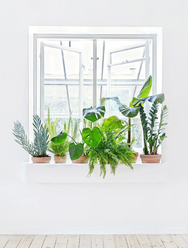 Le 12 piante da appartamento must have secondo pinterest for Piante appartamento design