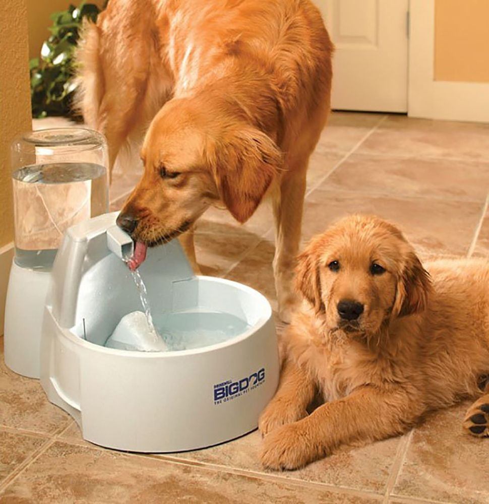 Drinking Fountain For Dogs Large Dog Water Dish Pets Indoor Dishes