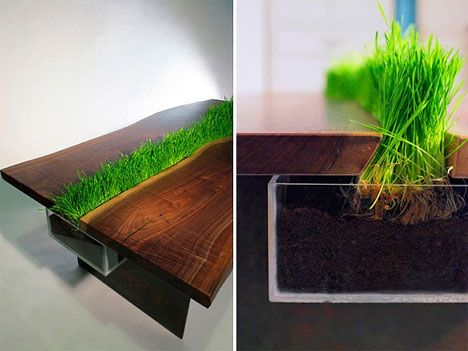 Lovely Coffee Table With LIVE Grass! | Turn This House Into A Home | Pinterest |  Planters, Grains And Centerpieces