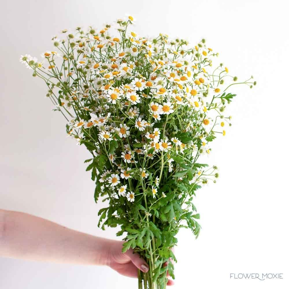 Feverfew Chamomile Flower Feverfew Chamomile Flowers Diy Wedding Flowers