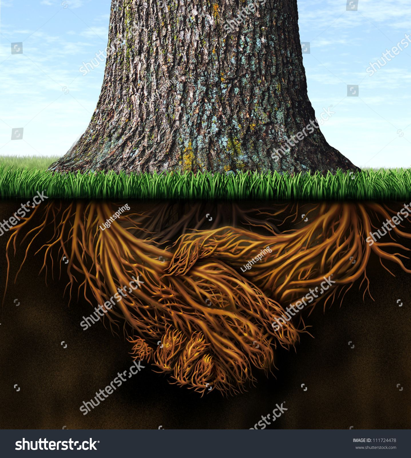 Strong deep business roots as a tree trunk with the root