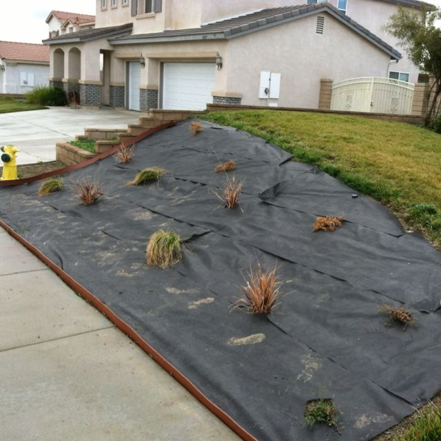 Garage Door Landscaping Ideas: Front Yard Is Coming Along! Only Need Mulch! I Am Wonder