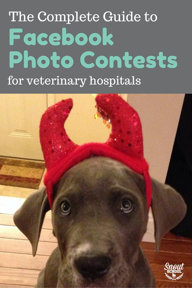 Vet Tech Quotes Running A Pet Photo Contest For Your Veterinary Hospital On