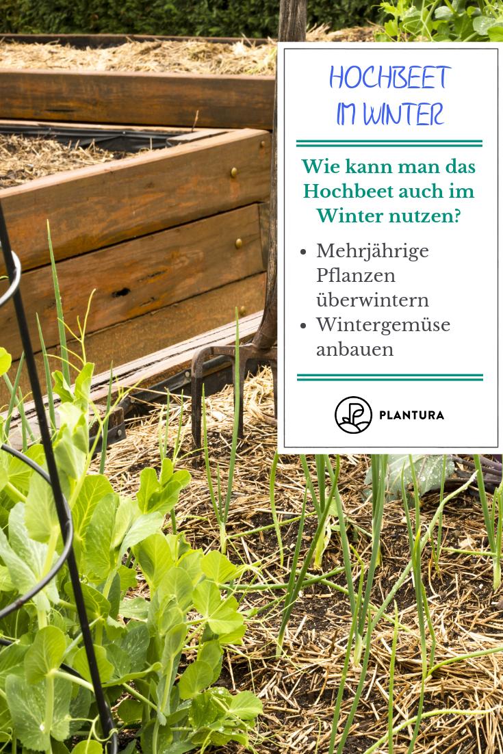 Hochbeet Im Winter Hochbeet Pinterest Garten Hochbeet Und