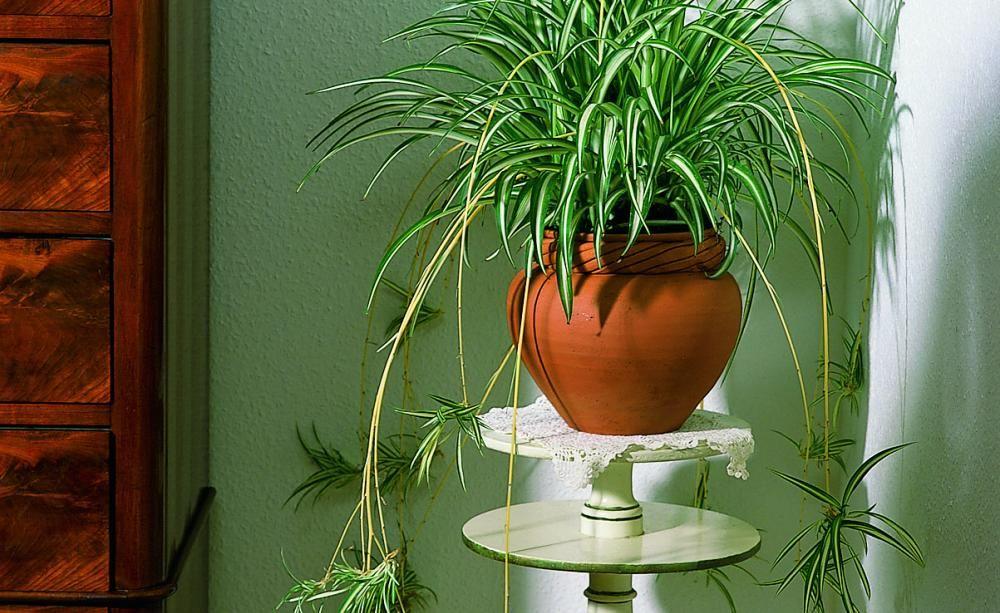 Prima Klima Zum Wohnen | Indoor Grune Zimmer Pflanzen Schoner Indoor Garten