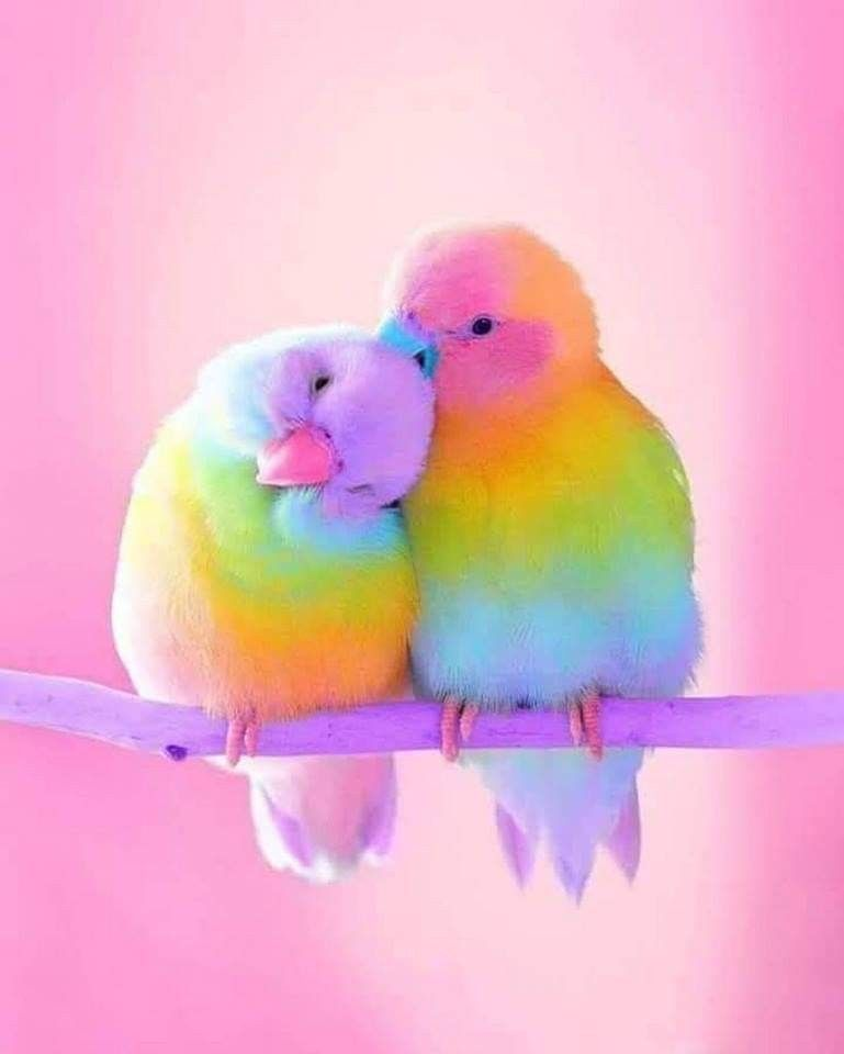 Lovebirds With Images Cute Baby Animals Cute Animals
