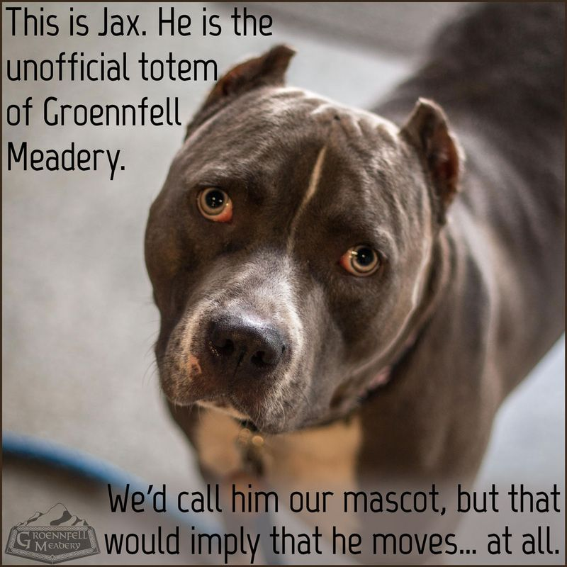 Thursday Fun Fact 1-22 - Groennfell Meadery - This is Jax. He is the unofficial totem of Groennfell Meadery. We'd call him our mascot, but that would imply that he moves... at all.
