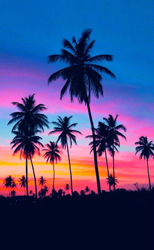 palmeras , con fondo hermoso