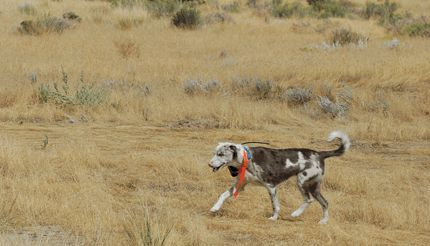 September 21, 2011--Millard County Chronicle Progress--Searching Topaz Mountain foothills for Susan Cox Powell
