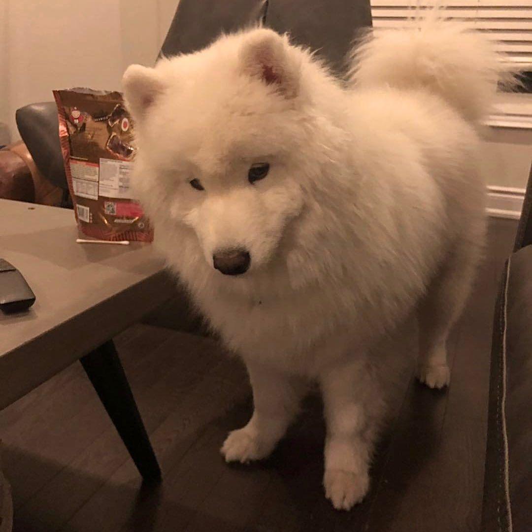 我很胖吗没有吧 พ นธ ส น ข ล กหมา หมา