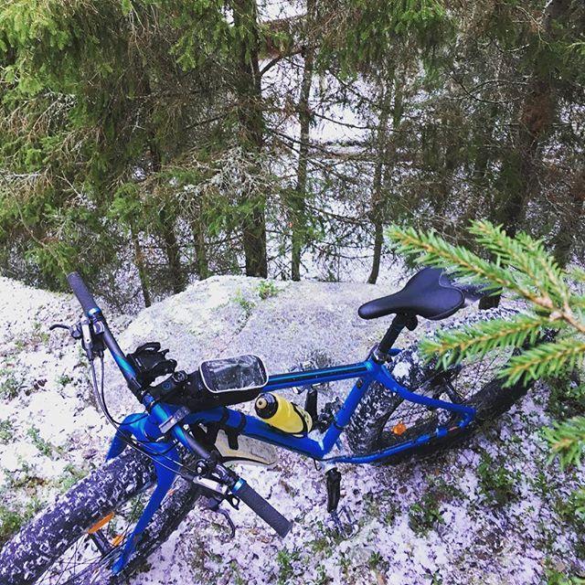 Reunalla #fatbike #läskipyörä #mtb #outdoors #yleluonto #satakunta #mtvsaa #pyöräilykeli #finnishforest #feltbikes
